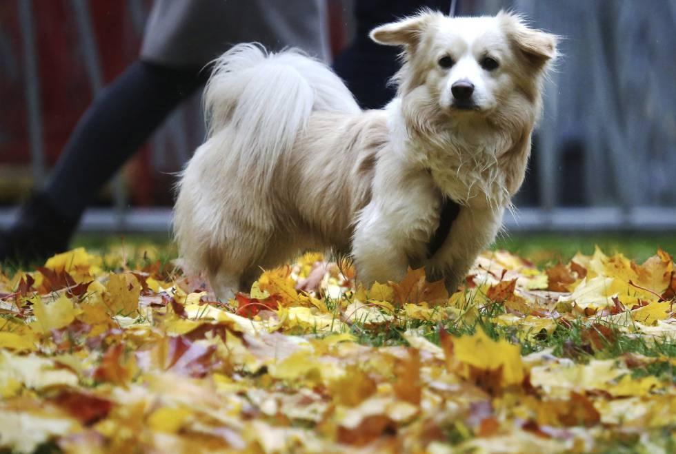 ¿Pedirías un permiso pagado para cuidar de tu perro?