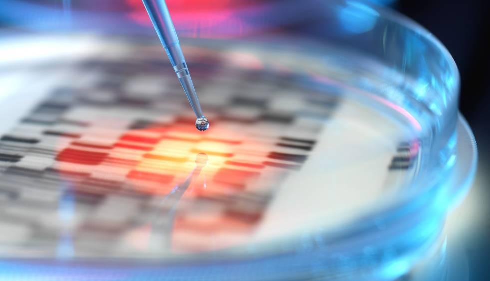 Placa de Petri en un laboratorio