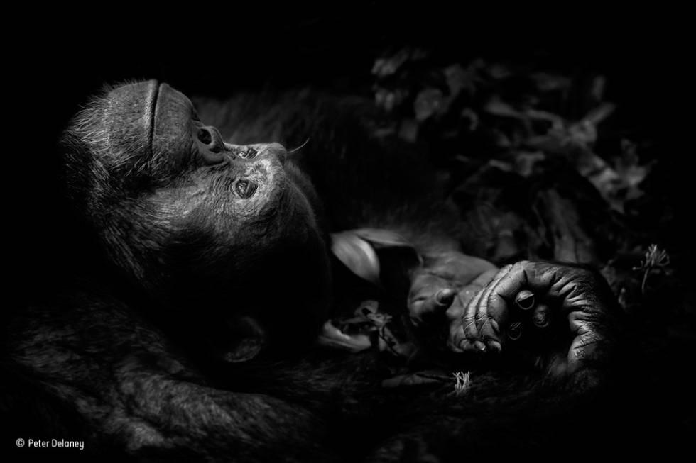 Foto ganadora en la categoría Retratos.
