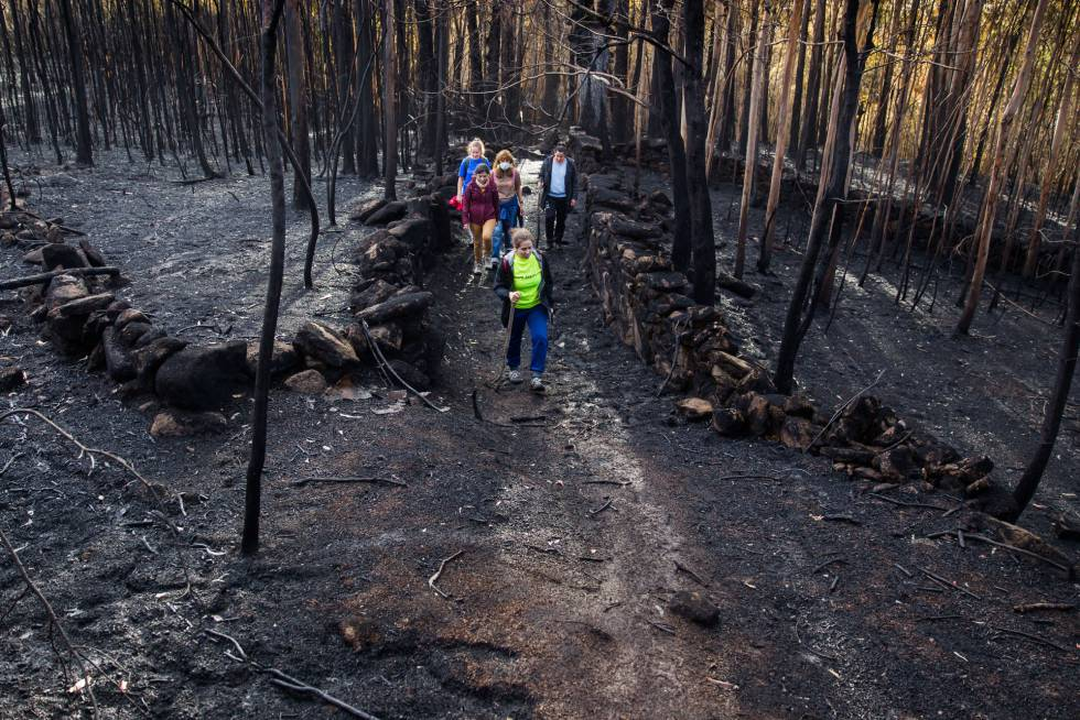 A group of volunteers walks through the forest to look for injured animals and feed any that survived the fire.