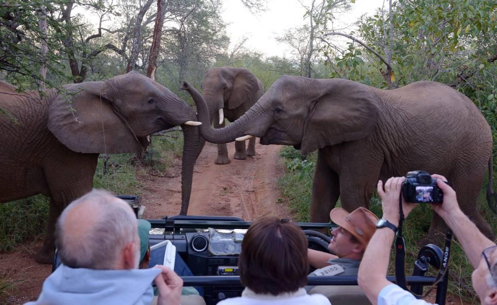Dos turistas mueren aplastados por un elefante al que querían ...