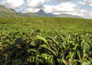 El corazón verde de Mozambique