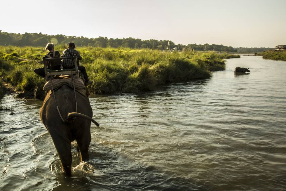 Deborah McCauley y Bishnu Lama contemplan un rinoceronte en Chitwan.