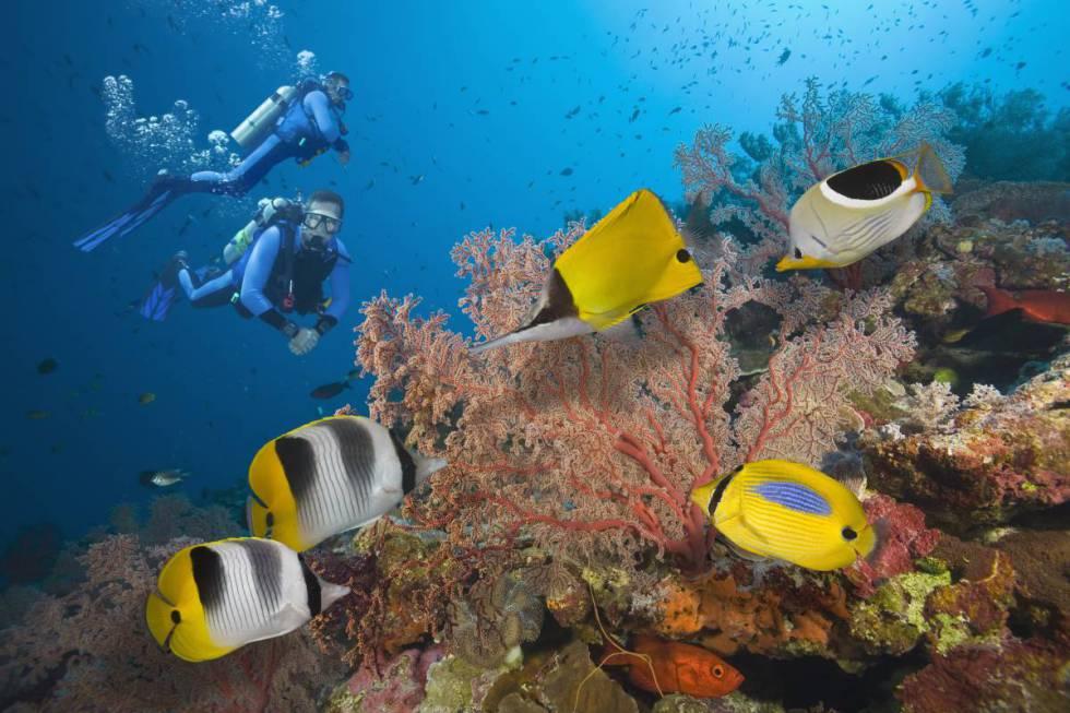 Dos buceadores en la Gran Barrera de Coral, en Australia.