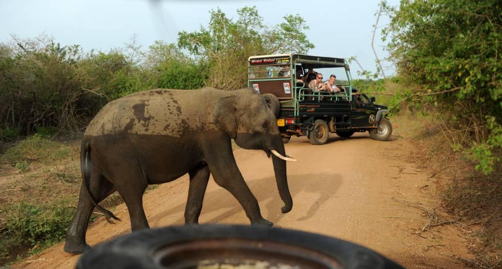 Elefante salvaje en el parque nacional de Yala (Sri Lanka).