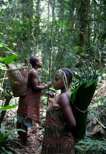 """Tradicionalmente, las pequeñas comunidades """"pigmeas"""" se trasladaban a menudo a través del bosque y recolectaban una gran variedad de alimentos, que intercambiaban por otros bienes con sociedades vecinas sedentarizadas."""