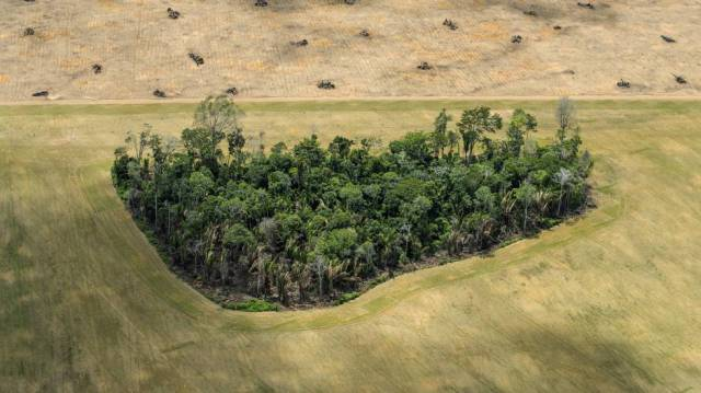 Pequeña porción de tierras cultivables cerca de Santarém.