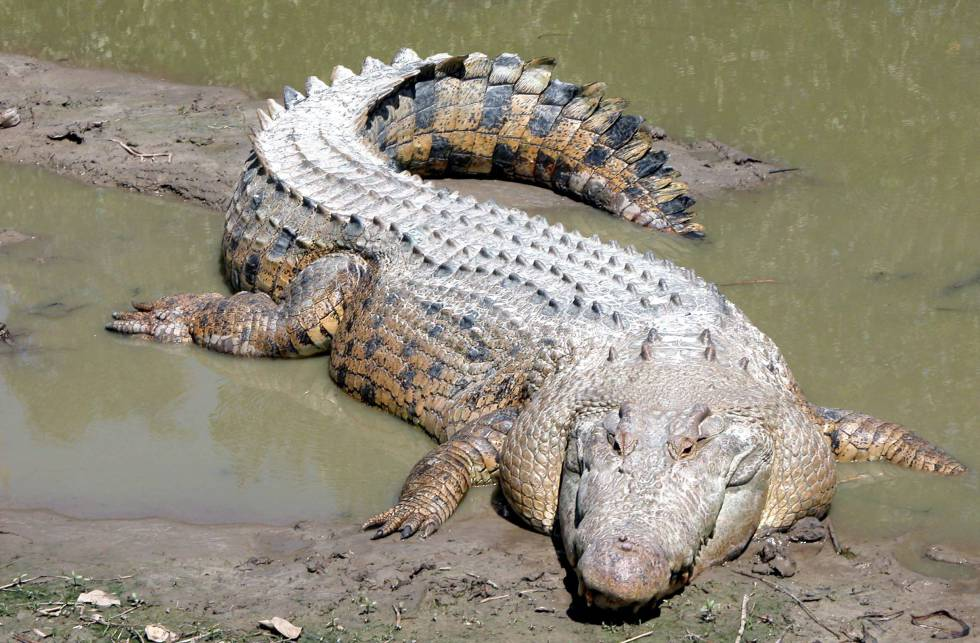 Una turista graba en Australia el ataque de un cocodrilo a su amiga   Blog Mundo animal   EL PAÍS