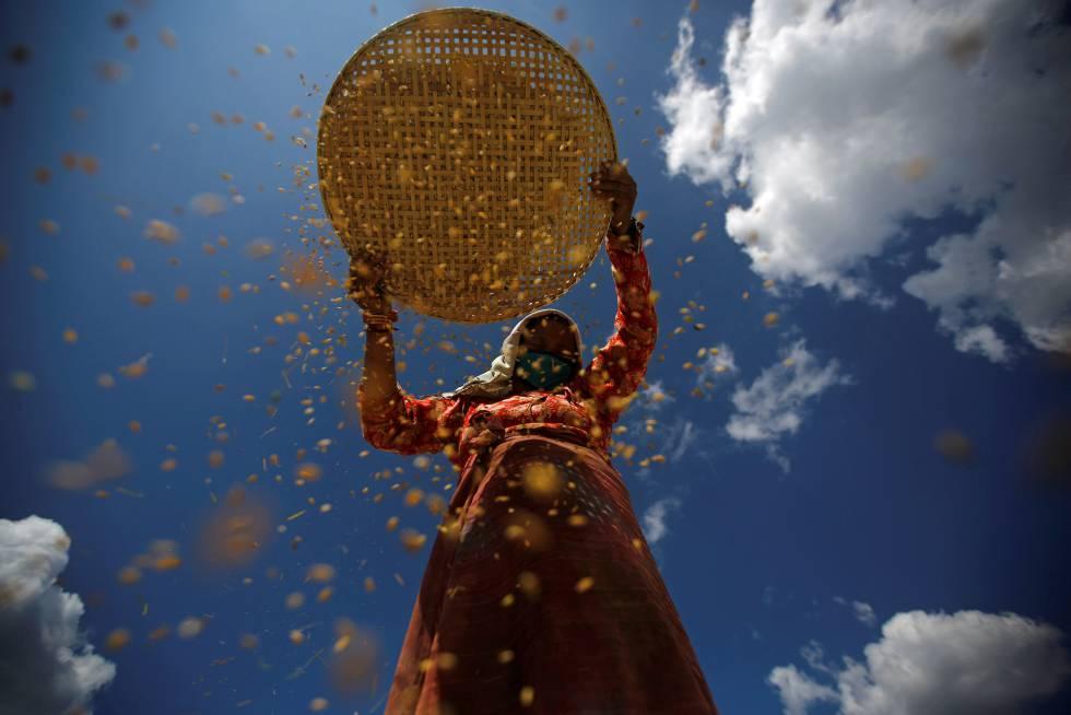 Una mujer nepalí separando el arroz de su cubierta.