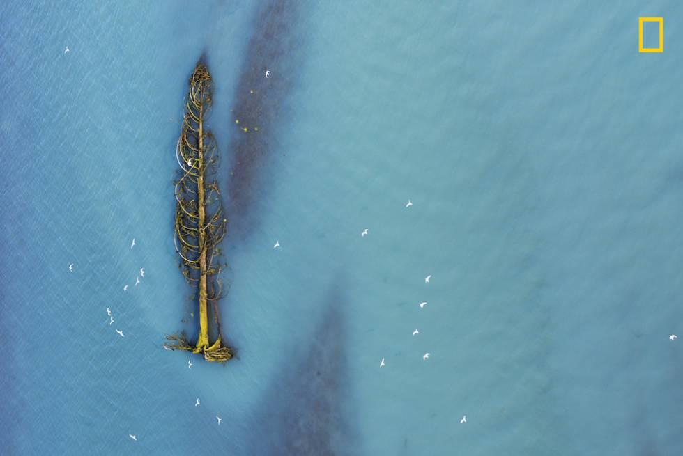 Un cedro es trasportado río abajo en la Columbia Británica canadiense.