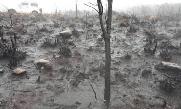 Cabeza de Meda tras uno de los incendios registrados en Galicia.