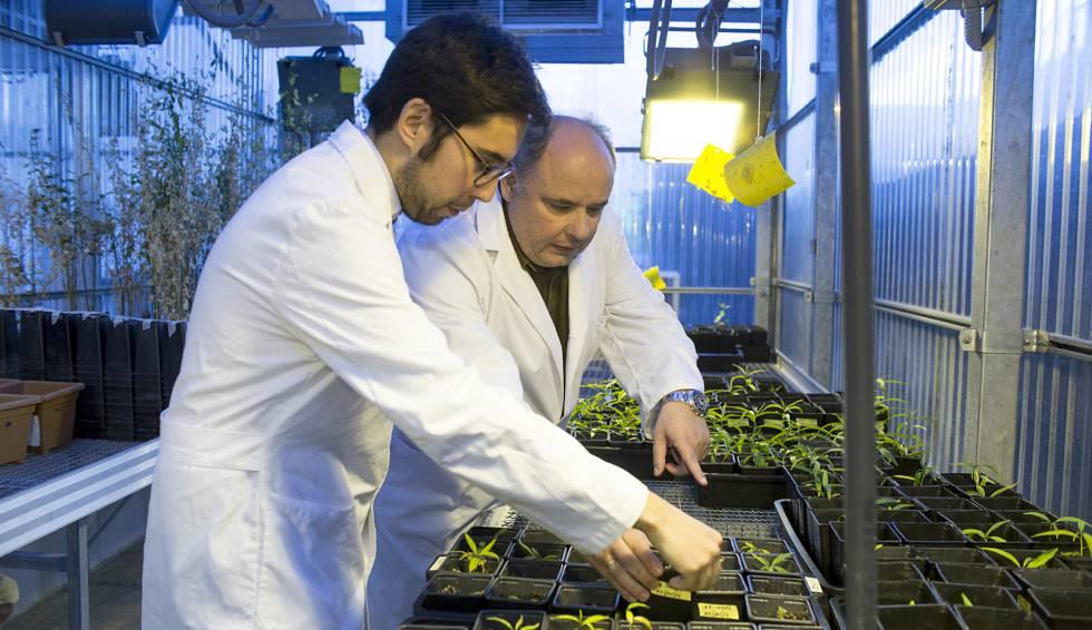 Los investigadores José Antonio González, a la derecha, y Nicasio Jiménez, en un invernadero de muestras del CSIC.