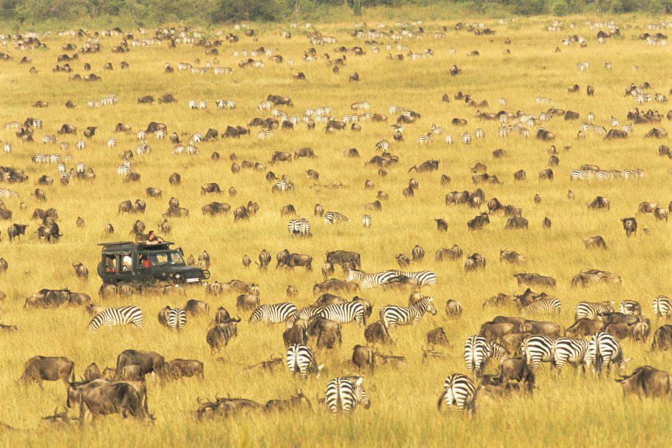 Turistas, ñus y cebras en Masái Mara (Kenia).