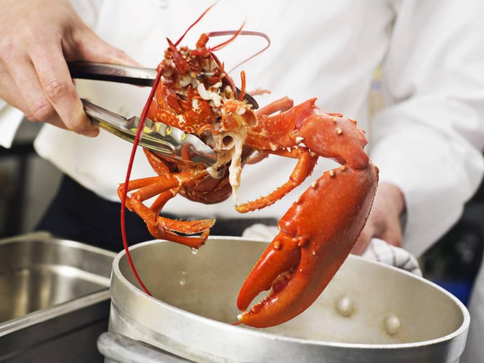 suiza proh be cocinar langostas vivas en agua hirviendo