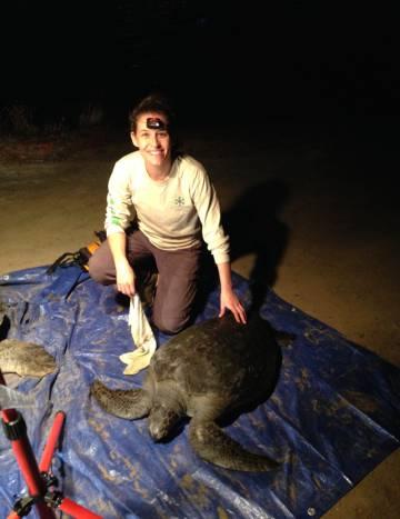 El calentamiento global convierte en hembras al 99% de una población de tortugas marinas