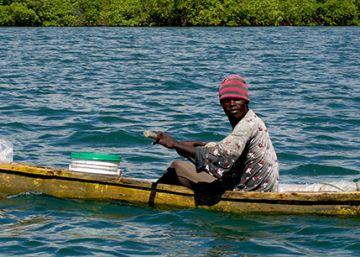 La lucha contra el pescado podrido