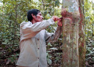 No hay indígenas sin bosques y no va a haber bosques sin indígenas