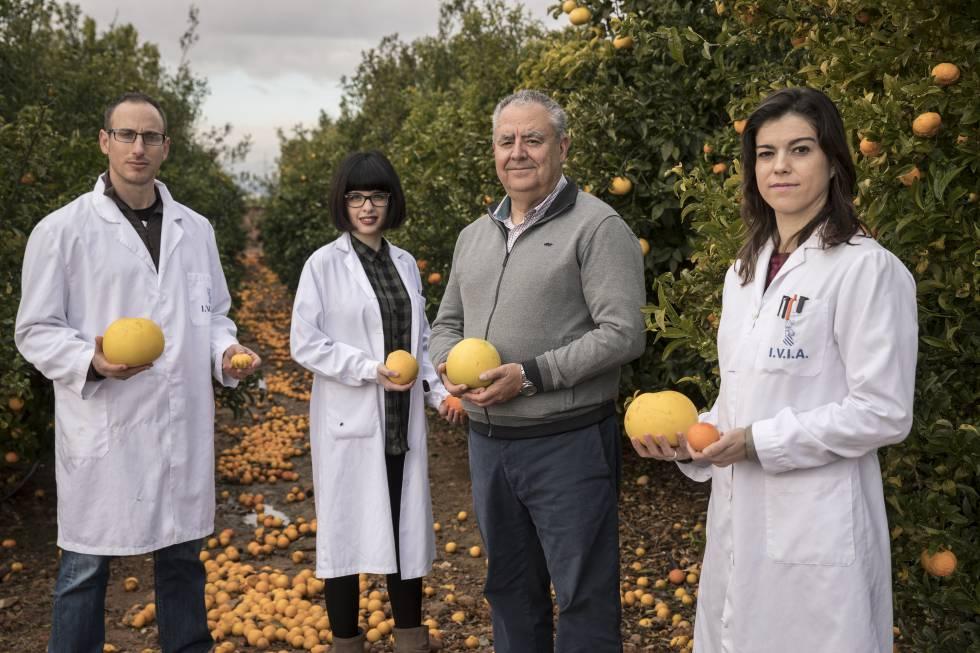 Los investigadores Antonio López, Estela Pérez, Manuel Talón y Victoria Ibáñez, en el IVIA.