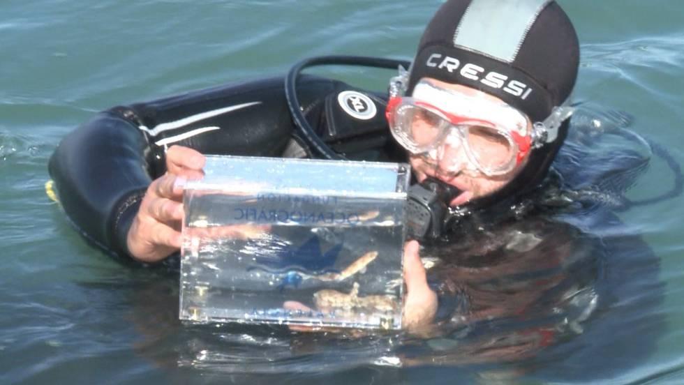 El oceanogr fic de valencia suelta 20 cr as de tibur n for Promociones oceanografic