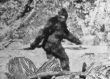 Un tribunal decidirá si bigfoot existe