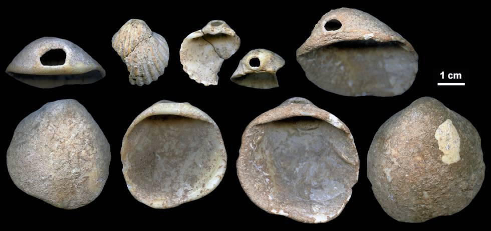 Conchas perforadas encontradas en la cueva de Los Aviones (Cartagena).