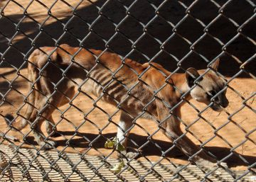 Food crisis in Venezuela not just hitting humans, as shocking zoo photos reveal