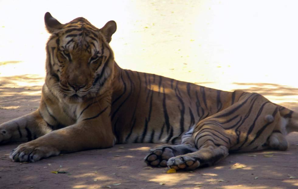 Los Animales De Un Zoológico De Venezuela Sufren Desnutrición Severa