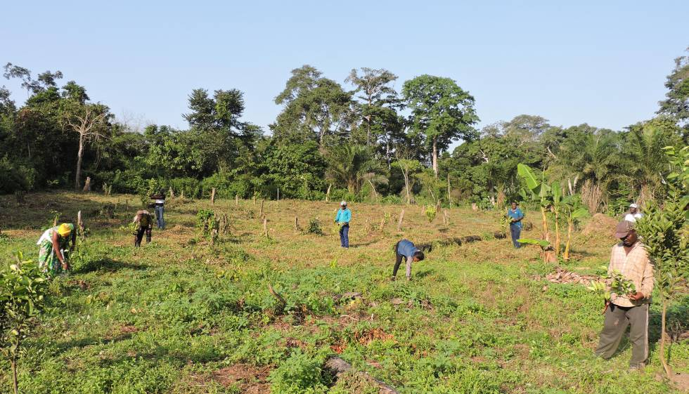 Jean Onana y sus compañeros de cooperativa, en el claro donde han plantado sus árboles.