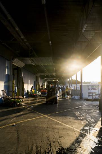 Dawn at the fish market loading bay.