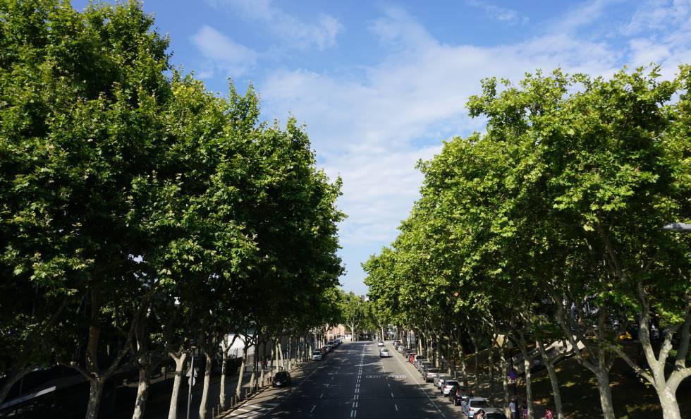Una avenida arbolada en Barcelona.