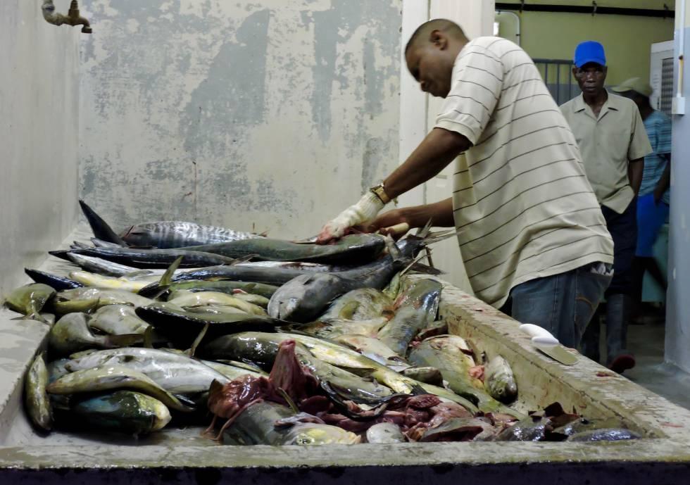 Un grupo de pescadores despieza las capturas del día en un local de la costa Este de Barbados.