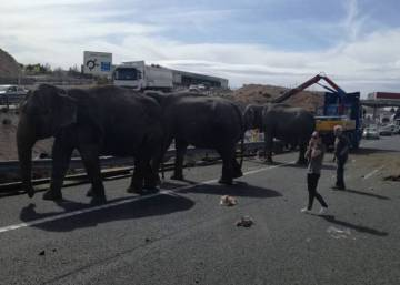 One elephant killed, two injured after road accident in southeast Spain