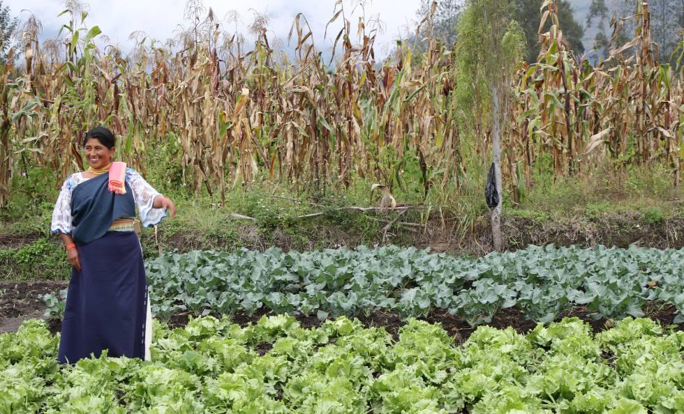 Una mujer junto a sus cultivos en Ecuador.