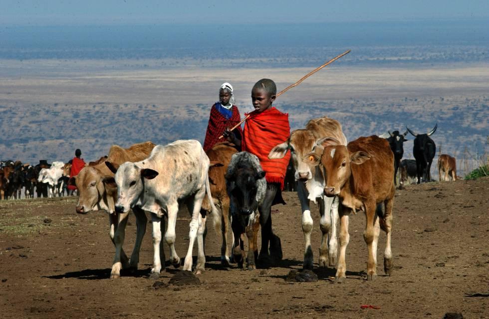 O avanço humano irá extinguir os grandes mamíferos da África.