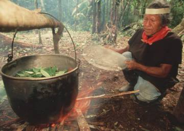 The mysterious power of ayahuasca