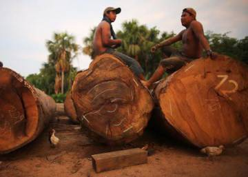 Amazon killings show scale of illegal logging in Peru