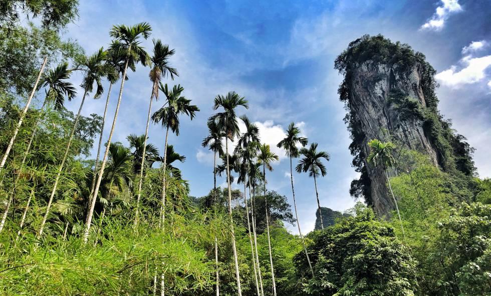 Pináculos calizos en el parque nacional Khao Sok
