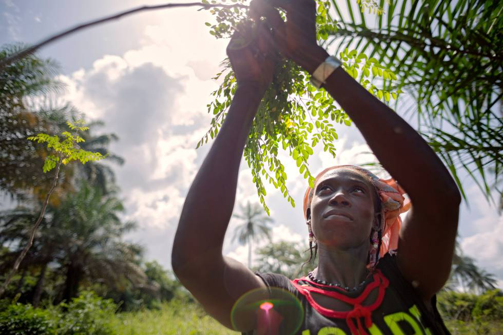 Una cooperativa de mujeres en Guinea ayuda a las agricultoras a tener más ingresos.