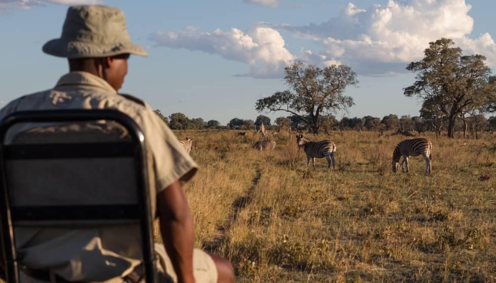 Uno de los guías de un safari en el delta del Okavango, en Botsuana, observa a un grupo de cebras.