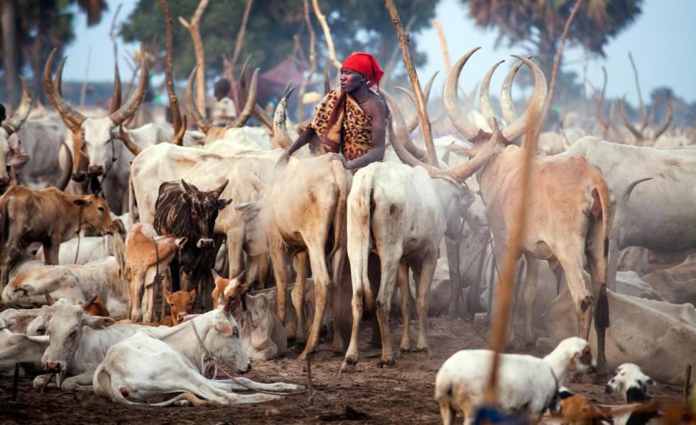 Un sursudanés junto a su ganado.