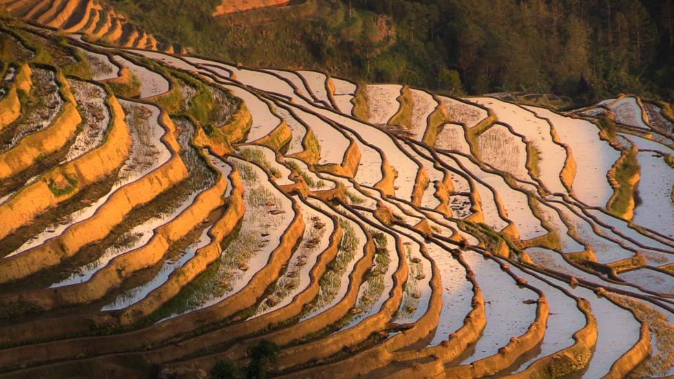 Terrazas de arroz de Yuanyang, en Yunnan.