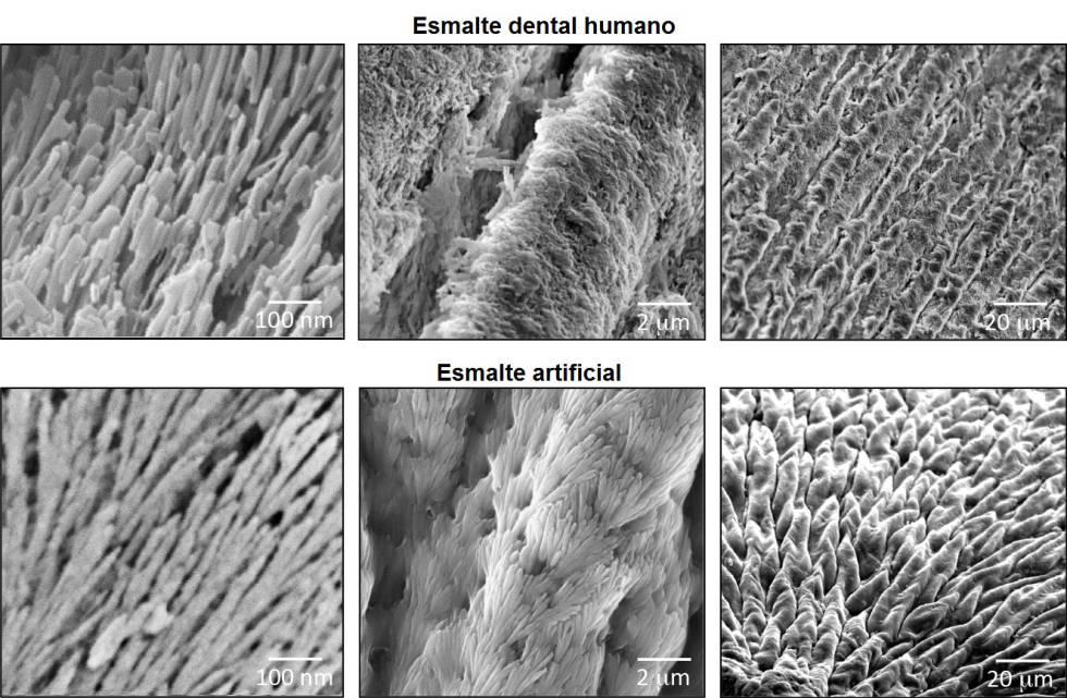 Comparación de las estructuras cristalinas del esmalte dental y de la estructura sintética, en diferentes escalas.