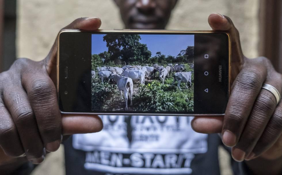 Keba Diouara muestra una foto de su ganado, que mantiene desde España.