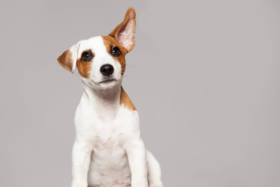 Por Que Las Personas Que Hablan A Los Perros Como Si Fueran Bebes