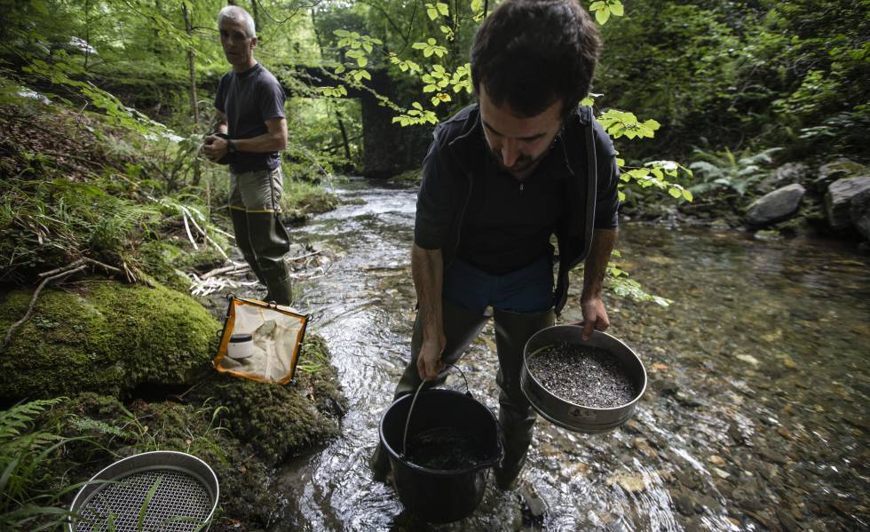 Borrar un embalse para resucitar un río