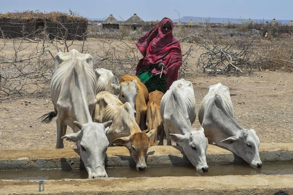 No último trimestre de 2017, a situação alimentar era crítica na Etiópia. A maior quantidade e intensidade de eventos climáticos adversos está por trás do aumento de famintos no mundo.