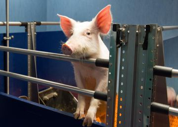 Labs that experiment with animals start to lift the veil of secrecy