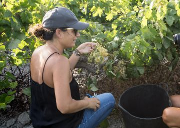 The tourists paying €25 to be grape harvesters for a day in Spain