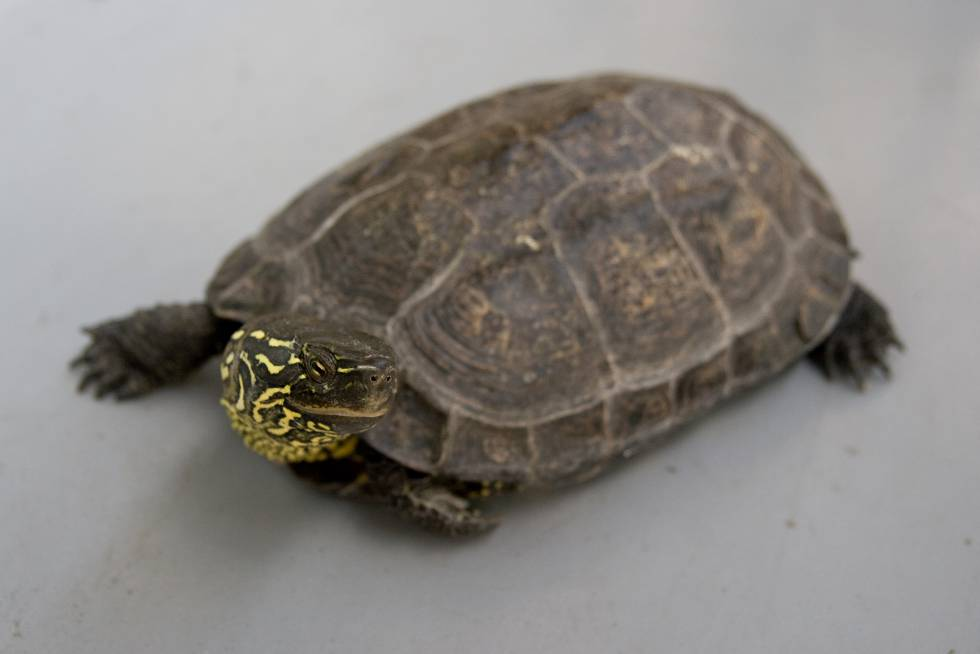 British woman in Tenerife found with turtle in vagina after