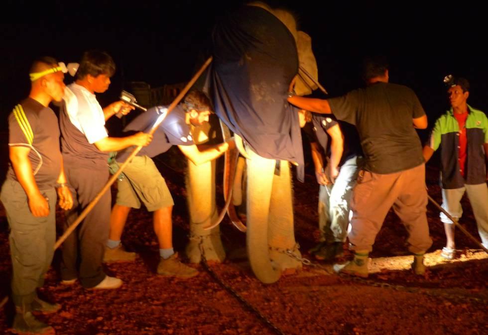 El equipo de MEME instala un collar con GPS a un elefante en Malasia.